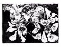 Norbert Tadeusz Lithograph Print Set Calla-Pape