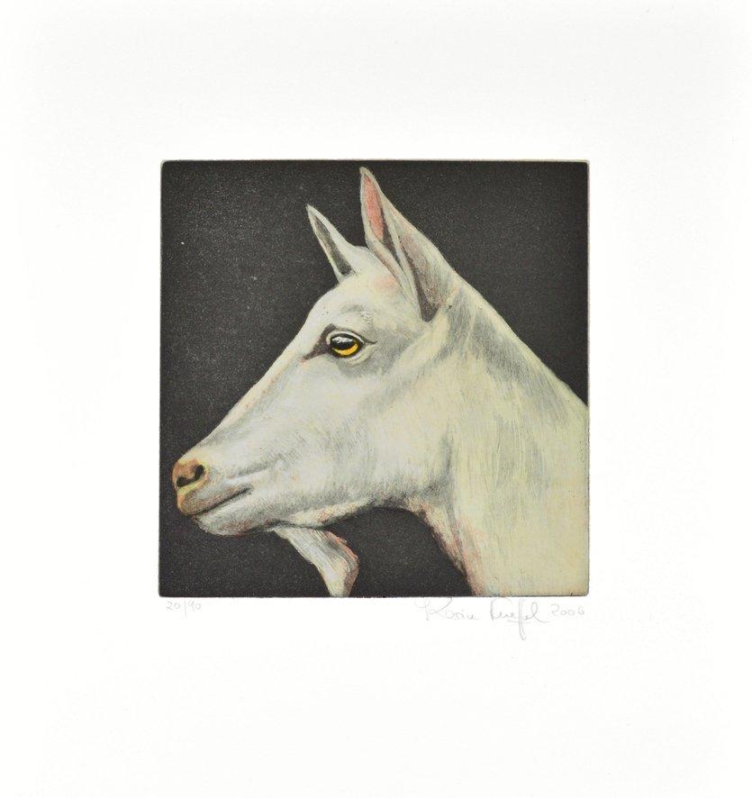 Karin Kneffel Tierportraits Ziege weiss Radierung Grafik
