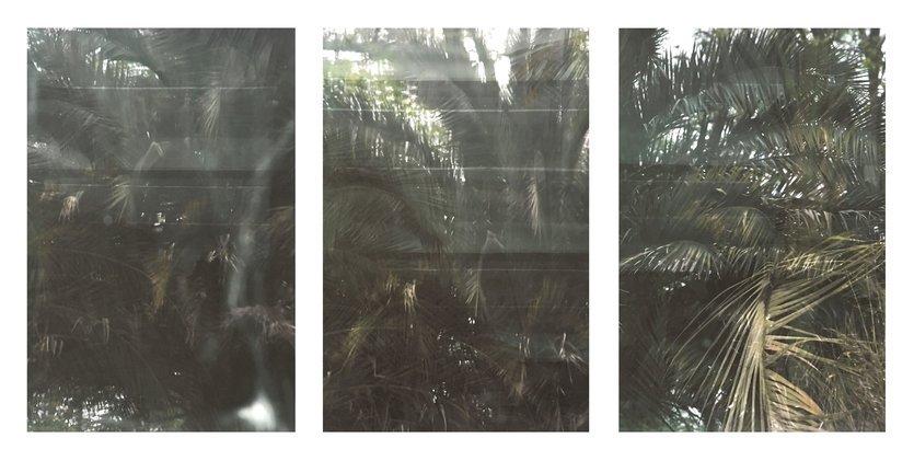 Eberhard Havekost Jungle 3-Set Foto Edition